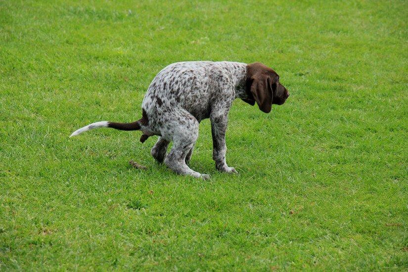 schleimiger durchfall hund