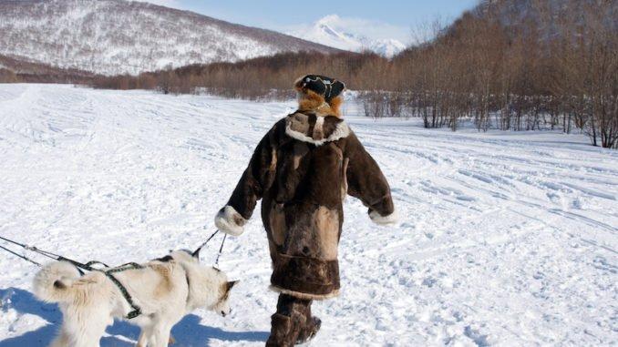 Kanadischer Eskimohund im Winter vor einem Schlitten