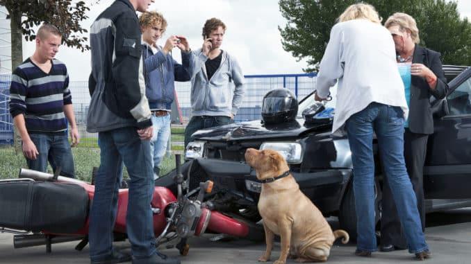 Hund verursacht einen Verkehrsunfall
