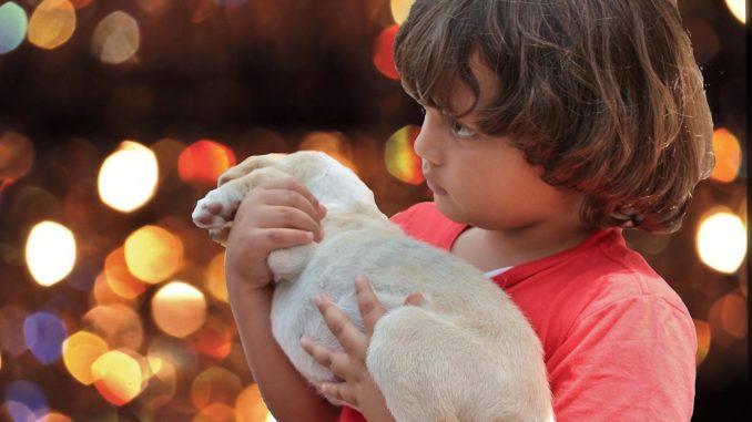 Welpe auf dem Arm von einem Kind